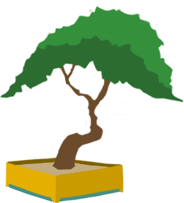 Bonsai tree without flowers